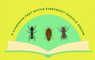 3 Common Pest Myths Everybody Should Know