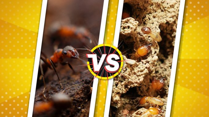 Know the Difference Between Ant and Termites