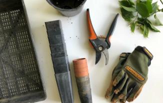 7 Tips for Starting Your Own Herb Garden